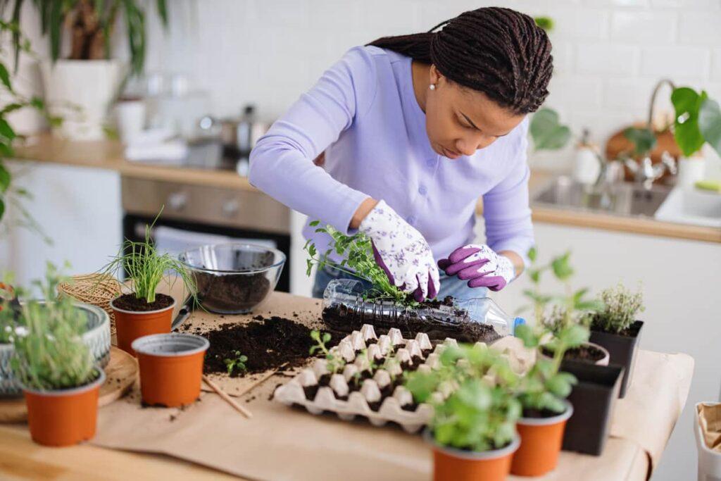 Horta caseira, mulher coloca hortaliças em recipientes